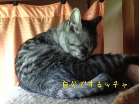 image_20130715213522.jpg