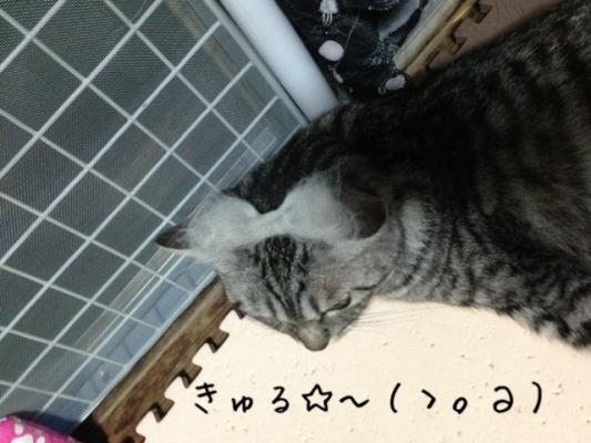 image_20130716221348.jpg