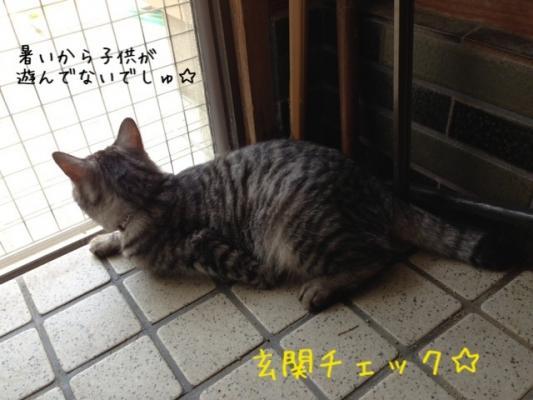 image_20130721151855.jpg