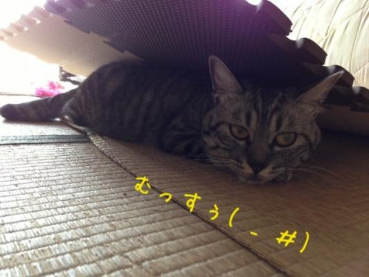image_20130727215700.jpg