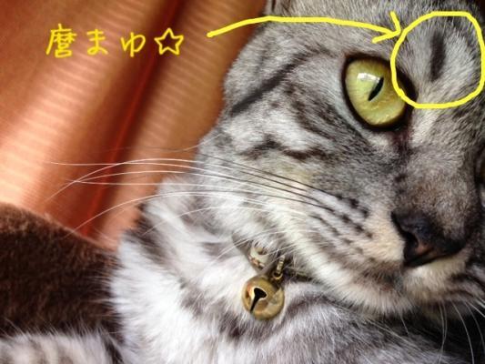 image_20130729235350.jpg