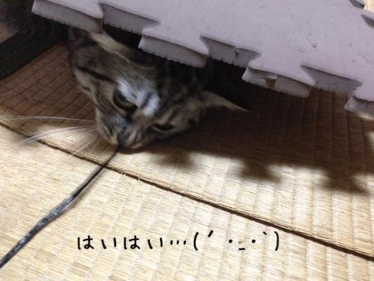 image_20130801222903d03.jpg