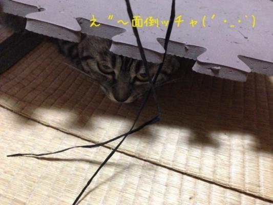 image_20130801222903ec1.jpg