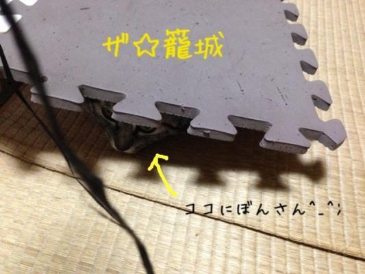 image_201308012229042b6.jpg