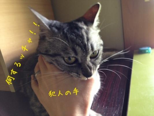 image_201308022225063f6.jpg