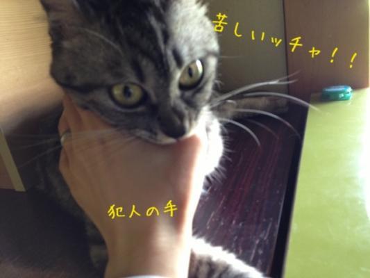 image_20130802222506ed9.jpg