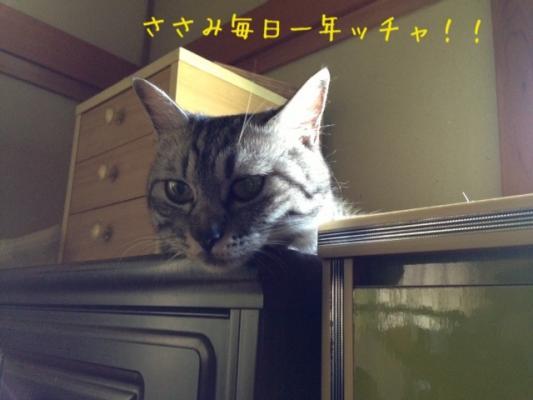 image_2013080322412364d.jpg