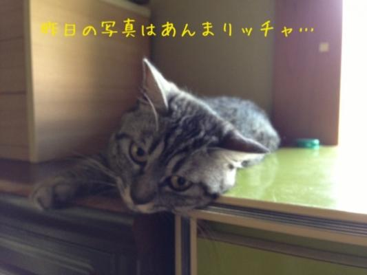 image_20130803224124421.jpg