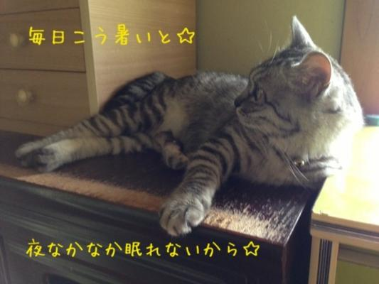 image_201308072212068f9.jpg