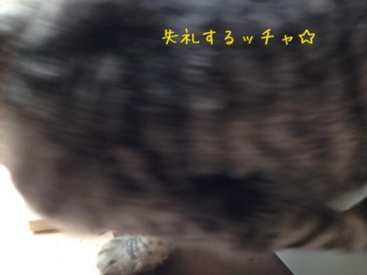image_2013081114584175e.jpg