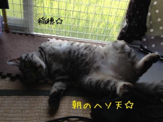 image_201308111458432c4.jpg