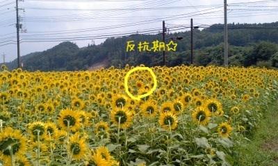 image_20130813213735863.jpg