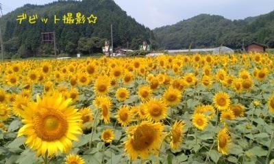 image_20130813213736768.jpg