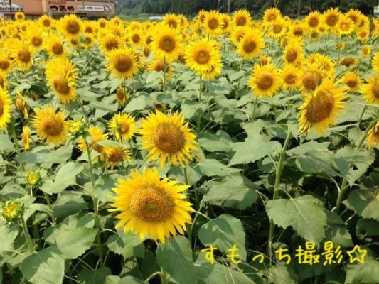 image_20130813213737e65.jpg