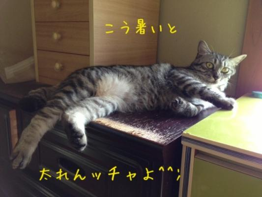 image_201308142216488c0.jpg