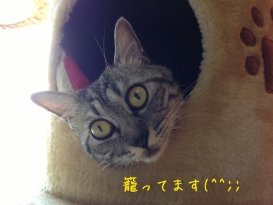 image_2013081822271660e.jpg