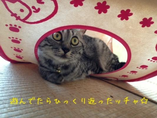 image_20130819224623919.jpg