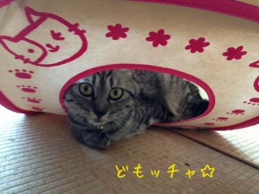 image_20130819224624522.jpg