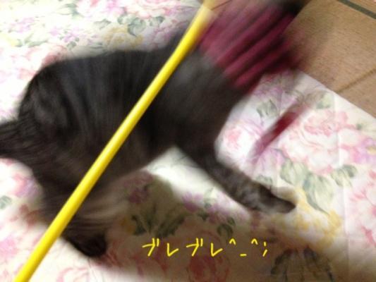 image_2013082522433621d.jpg