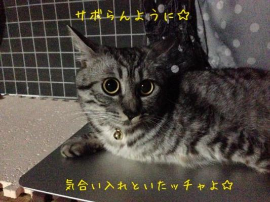 image_20130831081817295.jpg