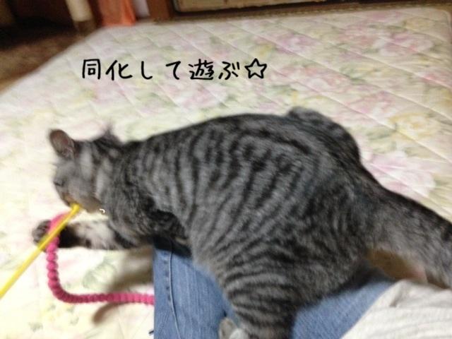 image_20130915223656a2e.jpg