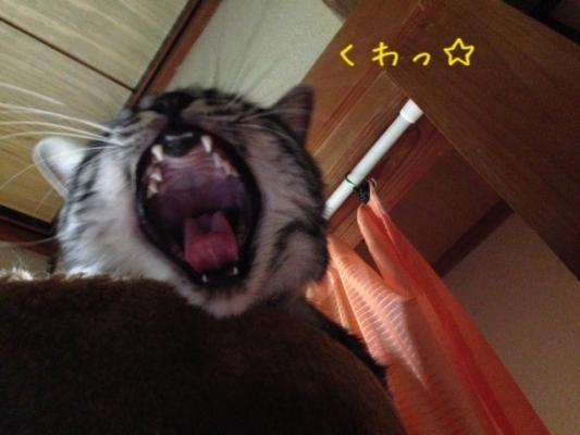 image_20130917231137d3b.jpg