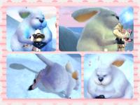 rabbit5.png