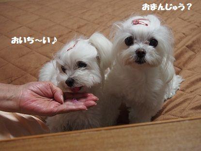 お饅頭とかき氷3