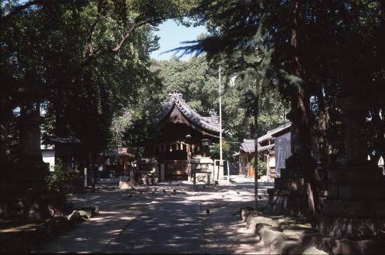 S-Ikonta12.jpg