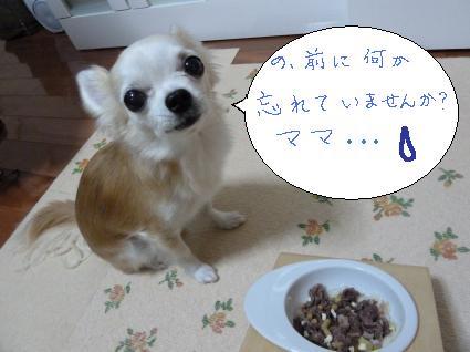 2012年12月HARU誕生日10歳