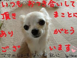 P1020626_convert_20130530100724.jpg