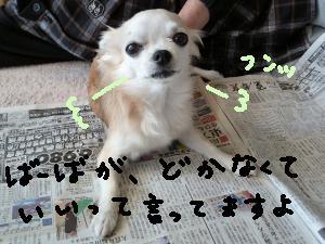 P1020683_convert_20130530134003.jpg