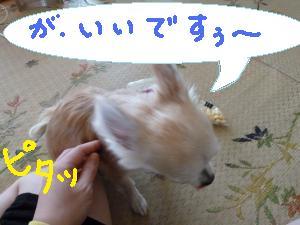 P1020786_convert_20130611130927.jpg