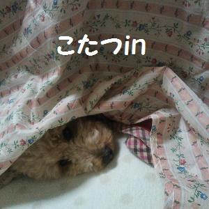 DSC_5729.jpg