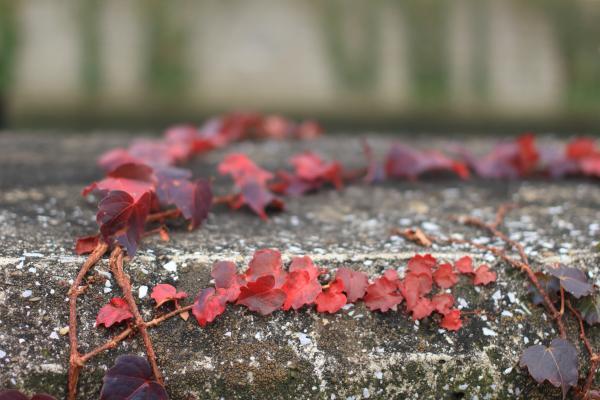 ご近所の秋 2014 その1
