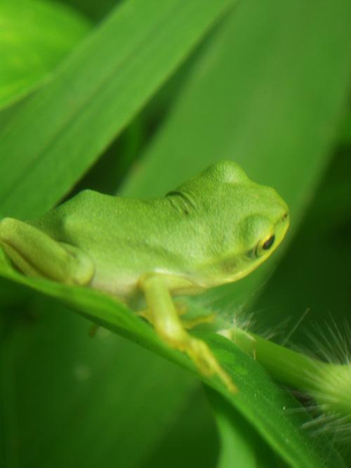 カエルマクロ3