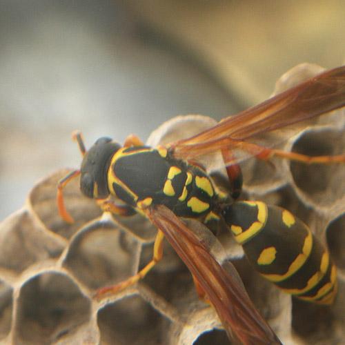 ハチの巣7