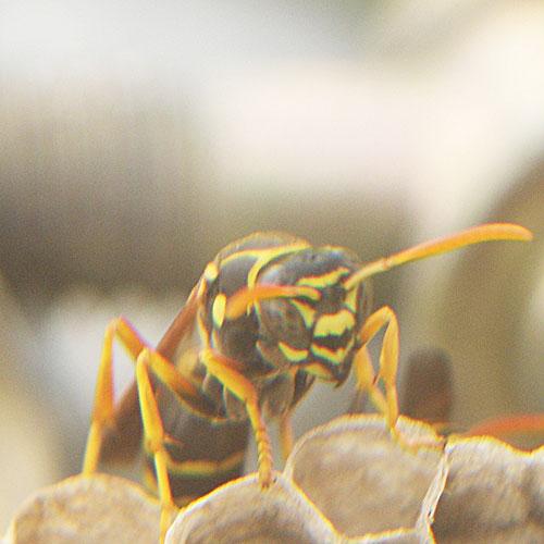 ハチの巣9-2