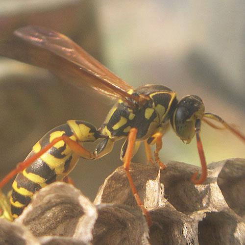 ハチの巣16