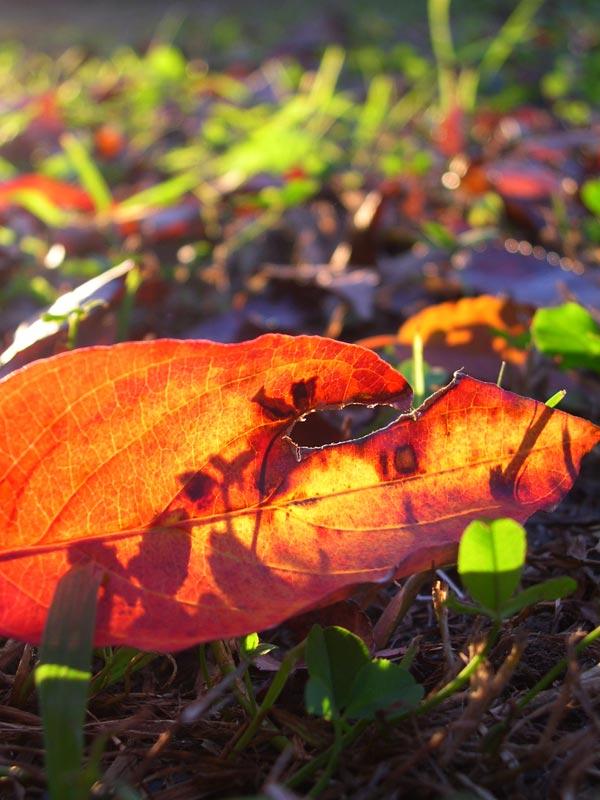 落ち葉の中の夕陽