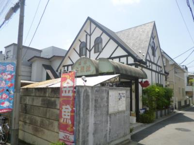 金魚坂10072 (2)