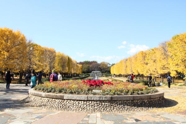 IMG_3261昭和記念公園 ブラザーズ昭和記念公園