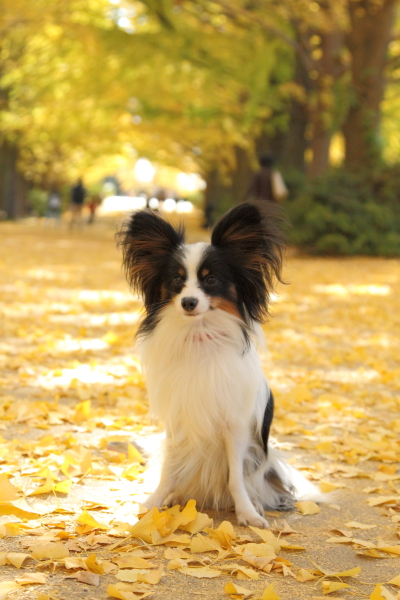 IMG_3306昭和記念公園 ブラザーズ昭和記念公園