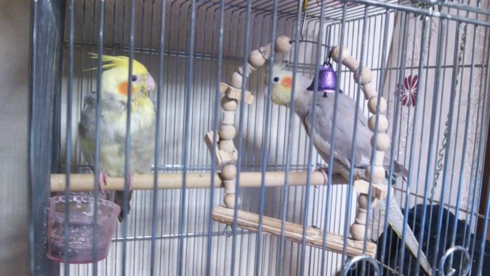 焼き鳥夫婦