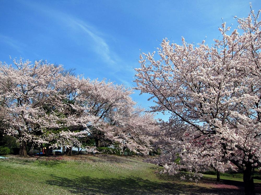 4月の写真001