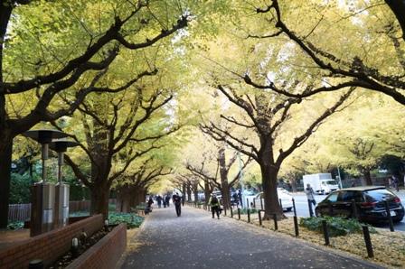2014神宮外苑3