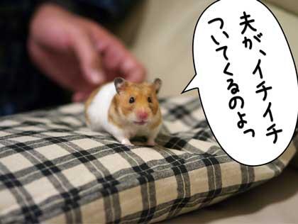 ぷんぷん1
