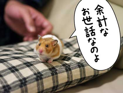 ぷんぷん2