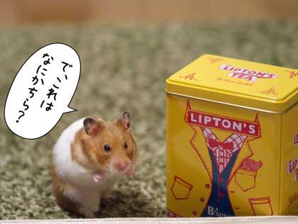 リプトン4