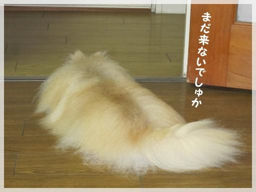 Momo13080012.jpg